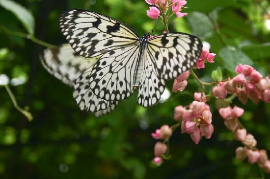 сад бабочек на пхукете фото