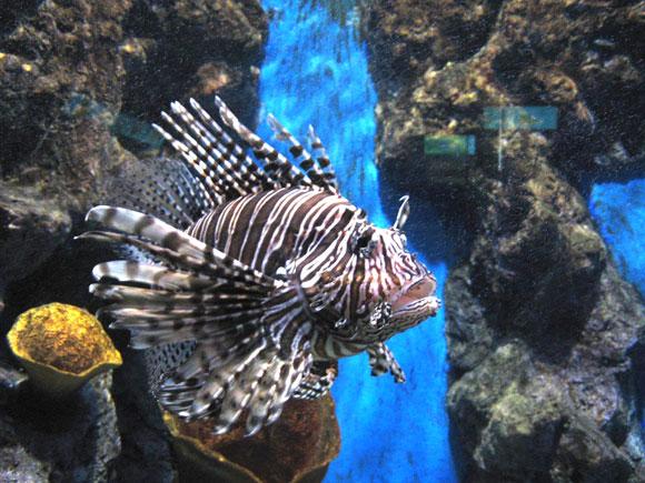 аквариум пхукета