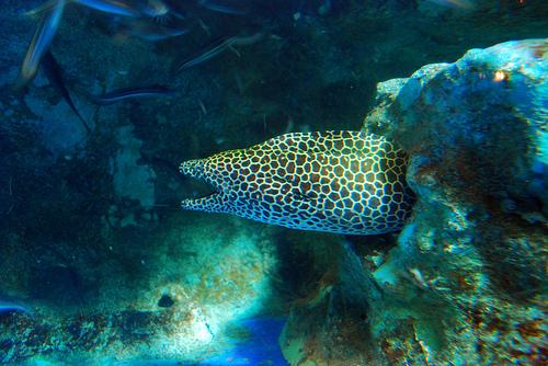 аквариум пхукета фото
