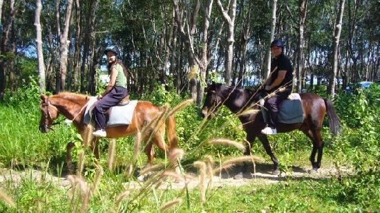 лошади на Пхукете