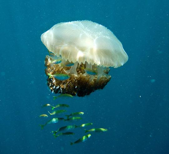 В море возле Пхукета появились опасные медузы