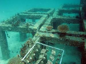 На Пхукете создают коралловые рифы