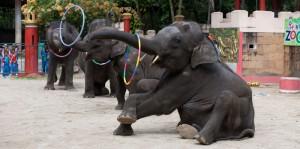 11 июля вход в зоопарки Таиланда будет бесплантым